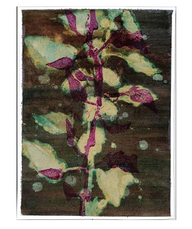 Caroline Serton - Bleach Nature - 0015