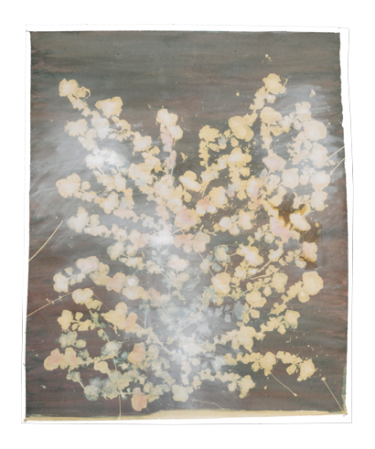 Caroline Serton - Bleach Nature - 0031