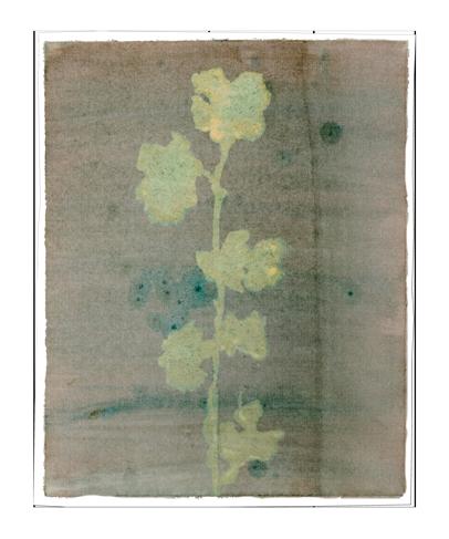 Caroline Serton - Bleach Nature - 0083
