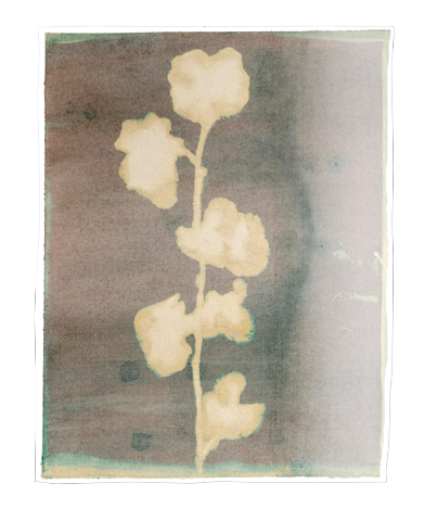 Caroline Serton - Bleach Nature - 0094